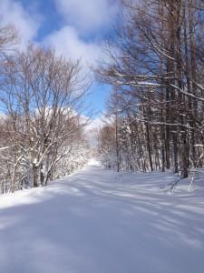 林道は膝までラッセル