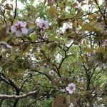 まだ桜も咲いている